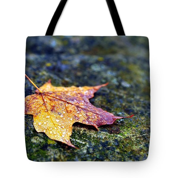 Autumn Leaf On Rocky Ledge Tote Bag by Terri Gostola