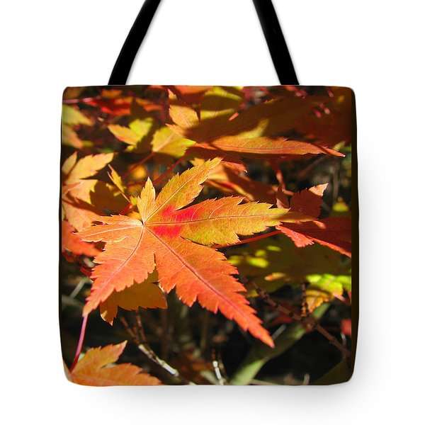 Tote Bag featuring the photograph Autumn Leaves 9 by Brooks Garten Hauschild