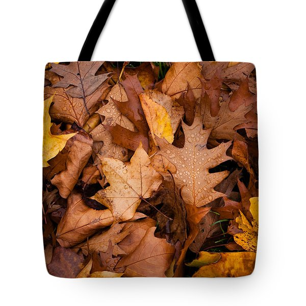 Tote Bag featuring the photograph Autumn Leaves by Matt Malloy