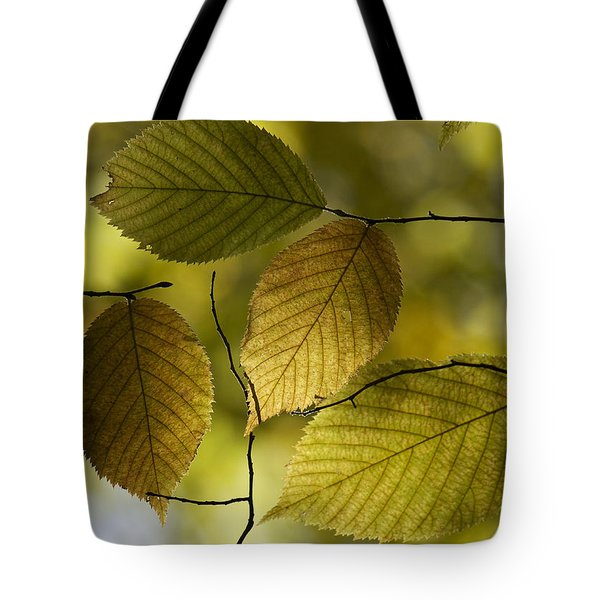 Autumn Mosaic Tote Bag by Penny Meyers