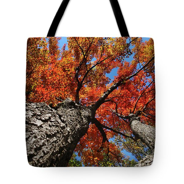 Autumn Nature Maple Trees Tote Bag by Christina Rollo