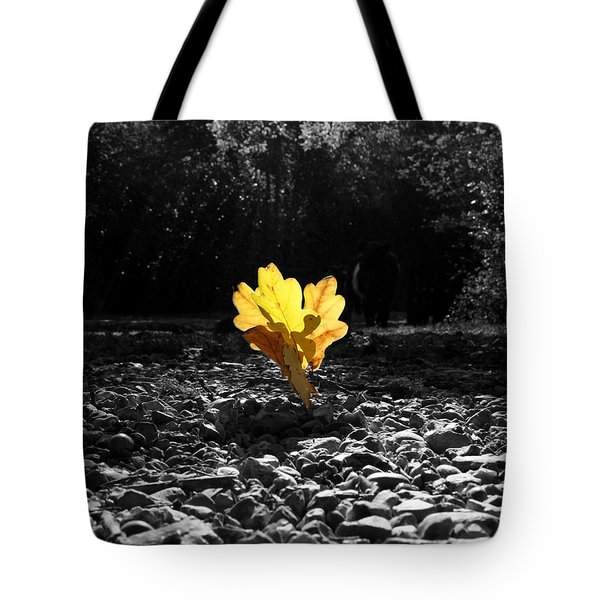 Autumn Oak Isolations Tote Bag by Terri Waters