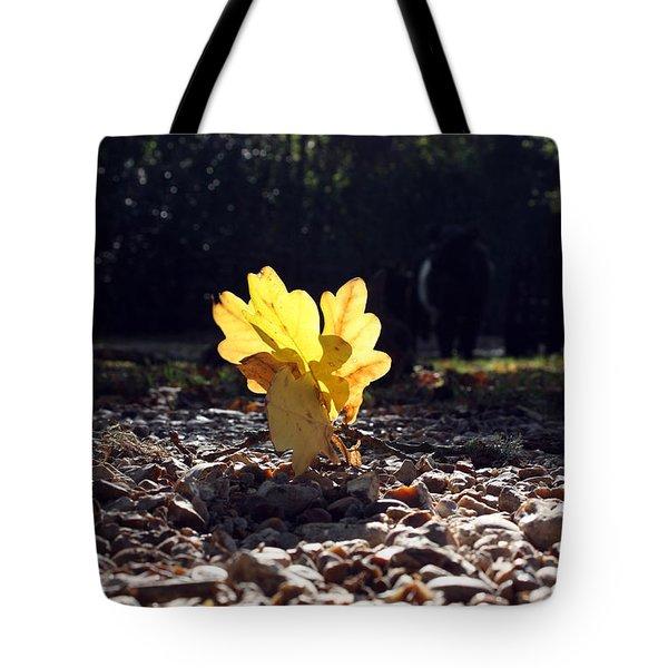 Autumn Oak Tote Bag by Terri Waters