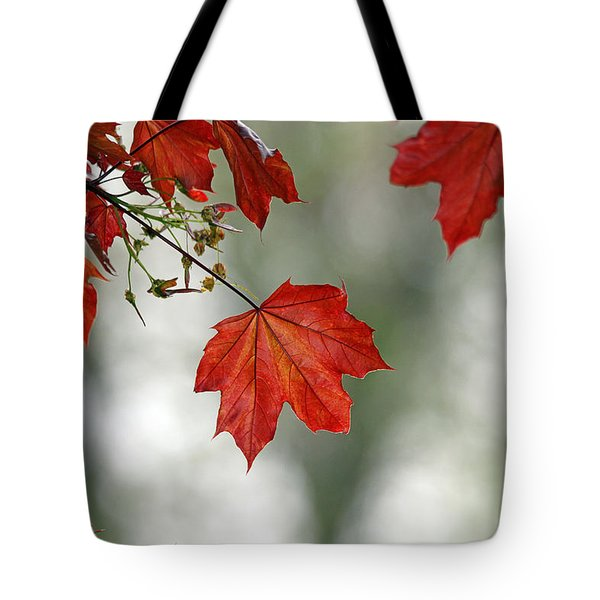 Autumn Red Tote Bag by Karol Livote