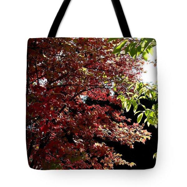 Autumn Snowball Bush Tote Bag by Will Borden