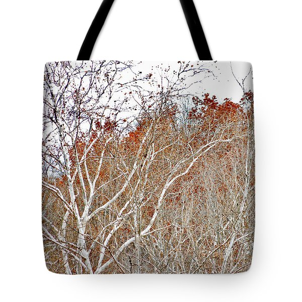 Autumn Sycamores Tote Bag by Bruce Patrick Smith