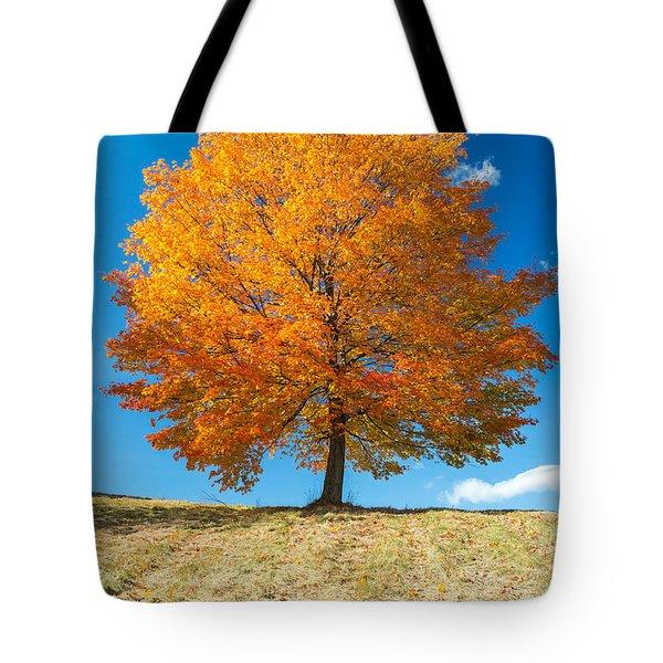 Autumn Tree - 1 Tote Bag