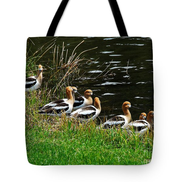 Avocets Tote Bag