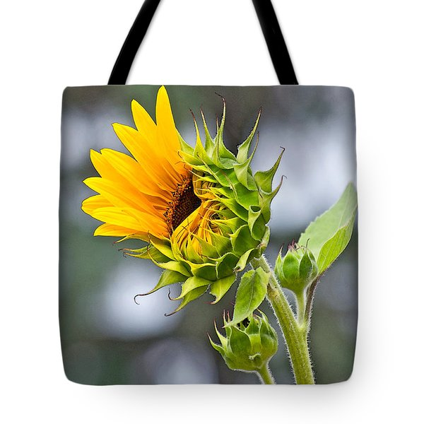 Awe What The Heck Tote Bag by Gwyn Newcombe