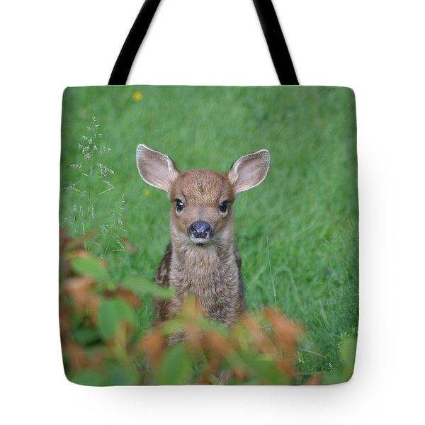 Baby Fawn In Yard Tote Bag by Kym Backland