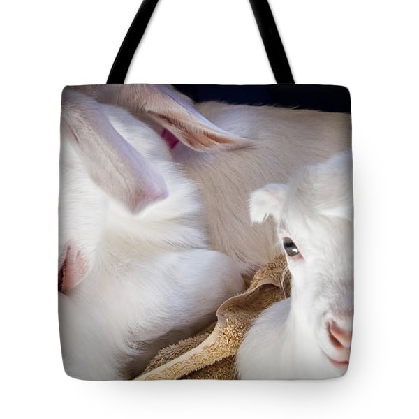 Baby Goats Napping Tote Bag