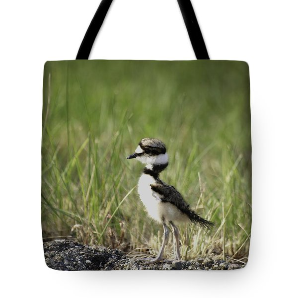 Baby Killdeer 2 Tote Bag