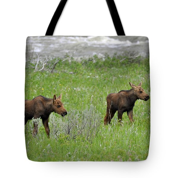 Baby Moose On The Banks Of The Gallatin Tote Bag
