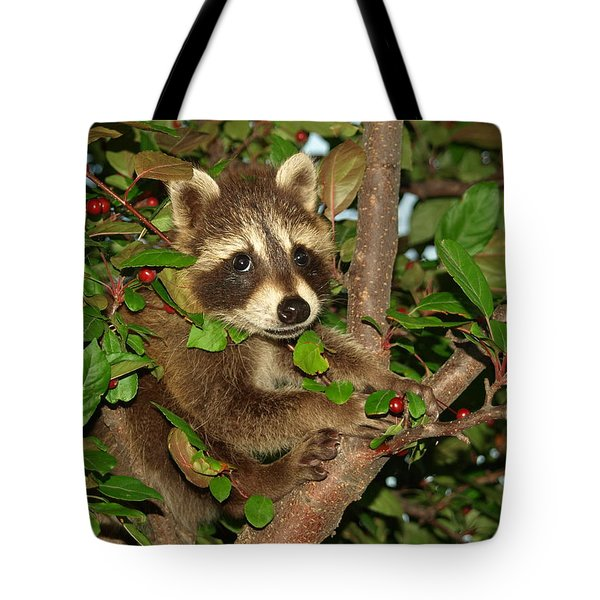 Tote Bag featuring the photograph Baby Raccoon by James Peterson