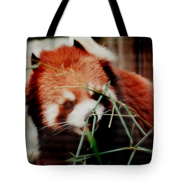 Tote Bag featuring the photograph Baby Red Panda Bear by Belinda Lee
