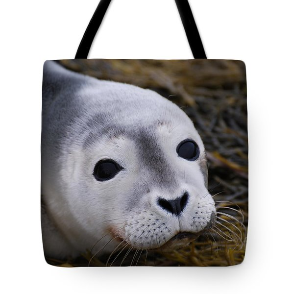 Baby Seal Tote Bag by DejaVu Designs