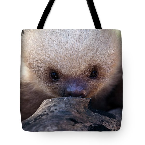 Baby Sloth 2 Tote Bag by Heiko Koehrer-Wagner