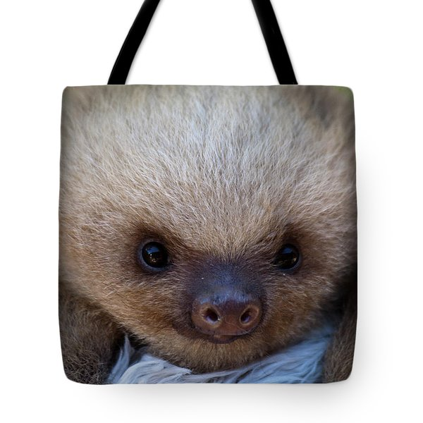 Baby Sloth Tote Bag by Heiko Koehrer-Wagner