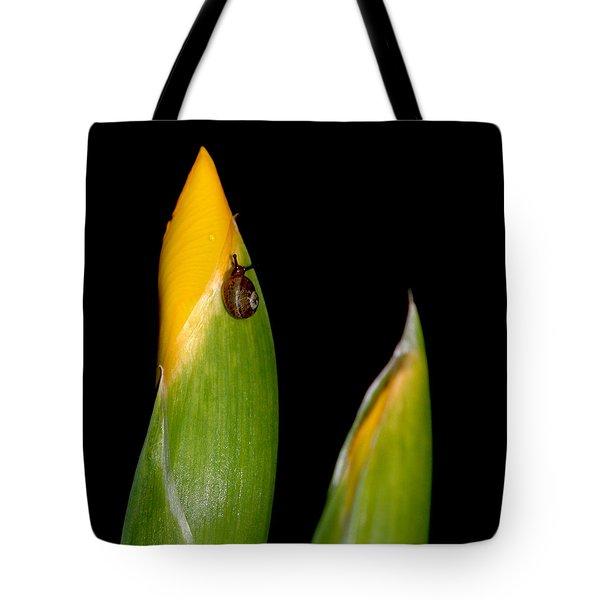 Baby Snail On Yellow Iris Bud Tote Bag