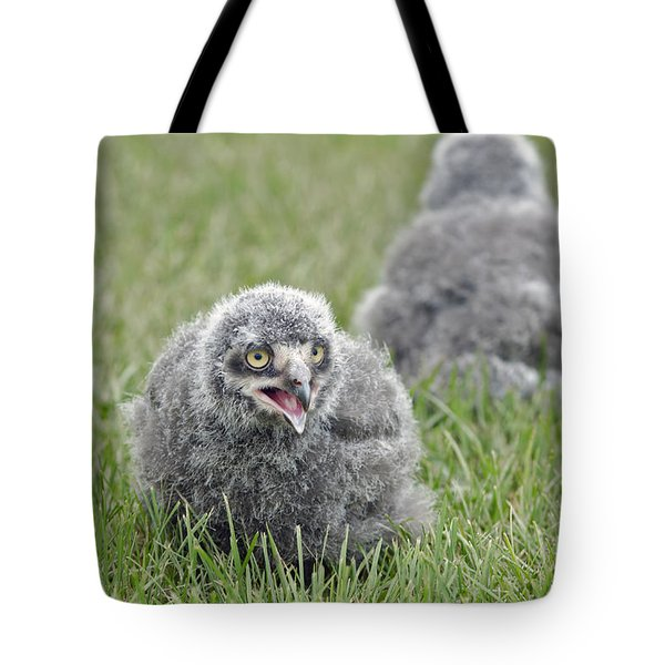 Tote Bag featuring the photograph Baby Snowy Owls by JT Lewis