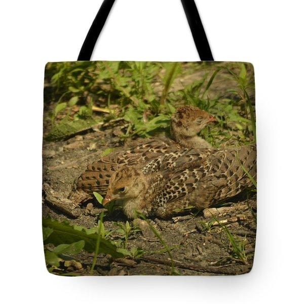 Baby Turkeys Tote Bag