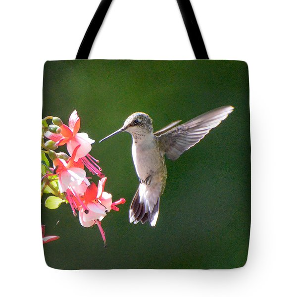 Backlit Fuchsia And Hummer Tote Bag by Amy Porter