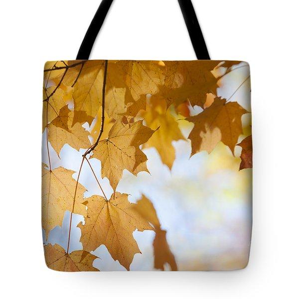 Backlit Maple Leaves In Fall Tote Bag by Elena Elisseeva