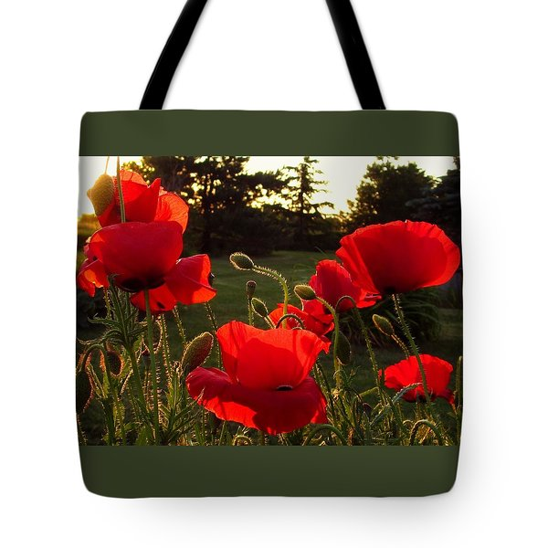 Backlit Red Poppies Tote Bag by Mary Wolf