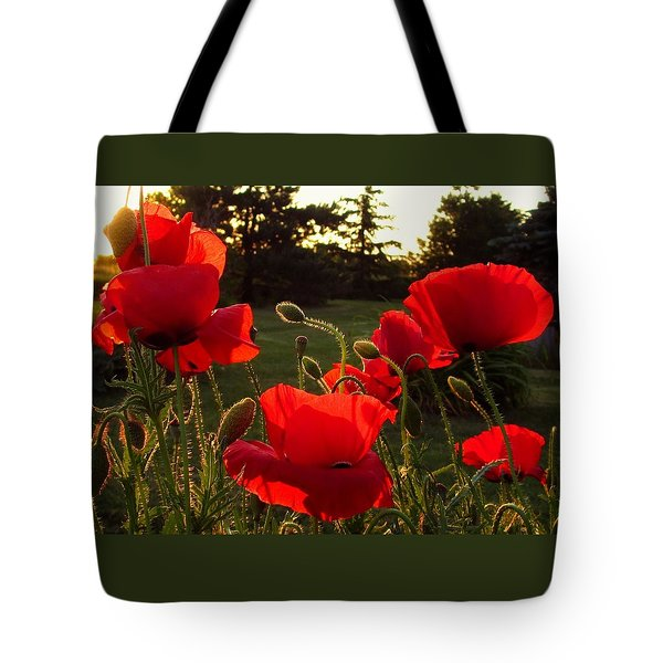 Backlit Red Poppies Tote Bag