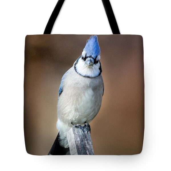 Backyard Birds Blue Jay Tote Bag by Bill Wakeley