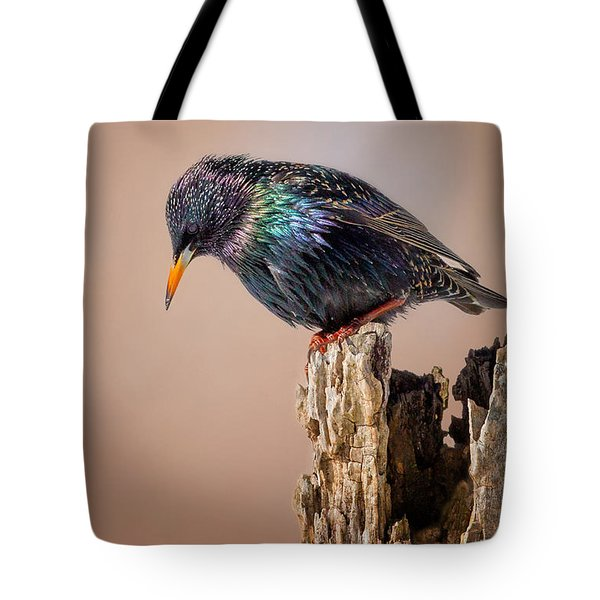 Backyard Birds European Starling Tote Bag by Bill Wakeley