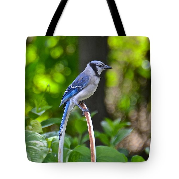 Backyard Bluejay Tote Bag by Carol  Bradley