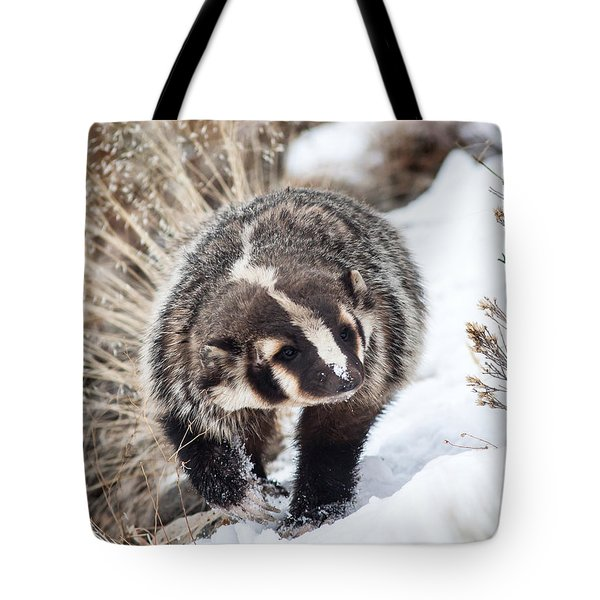 Badger In The Snow Tote Bag