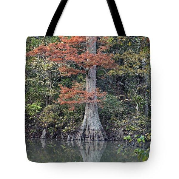 Bald Cypress In White River Nrw Arkansas Tote Bag