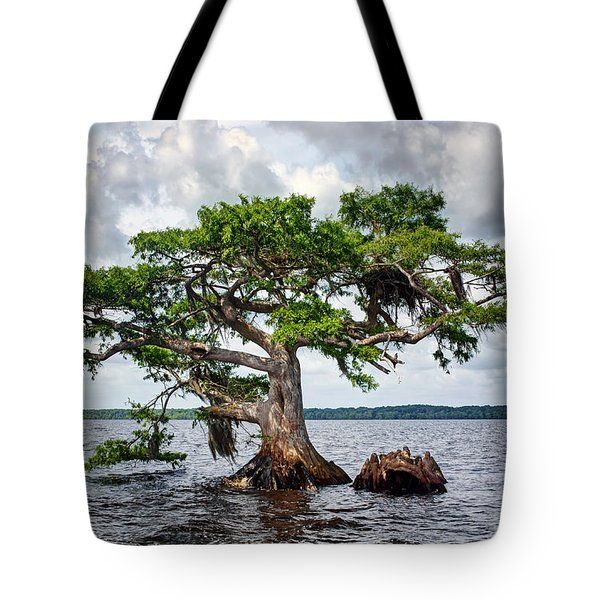 Bald Cypress Tote Bag