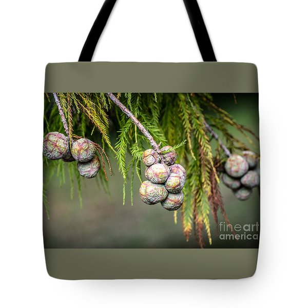 Bald Cypress Tree Seed Pods Tote Bag