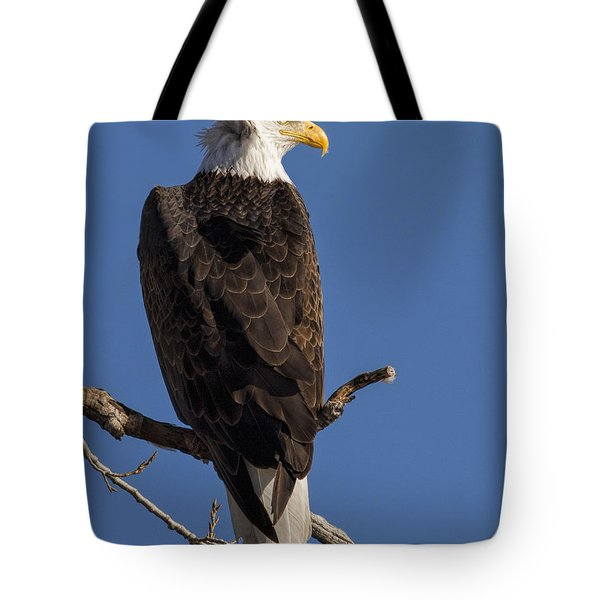 Tote Bag featuring the photograph Bald Eagle 1 by Rob Graham