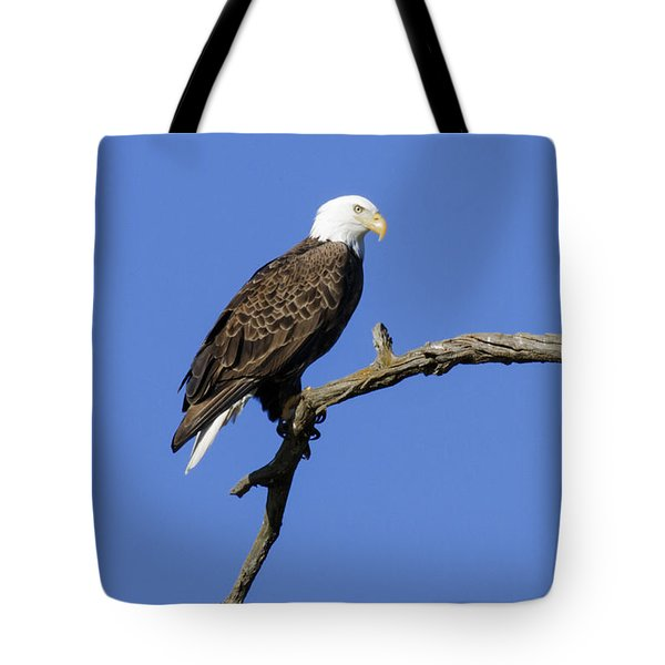 Tote Bag featuring the photograph Bald Eagle 4 by David Lester