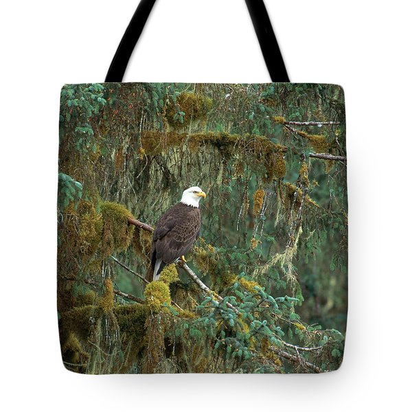Bald Eagle Tote Bag by Art Wolfe