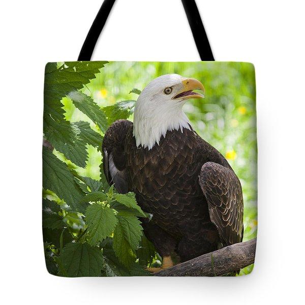 Bald Eagle Tote Bag by Chris Dutton