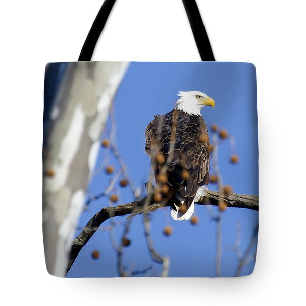 Tote Bag featuring the photograph Bald Eagle by David Lester