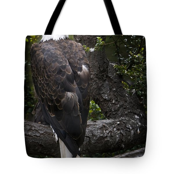 Bald Eagle Tote Bag by David Millenheft