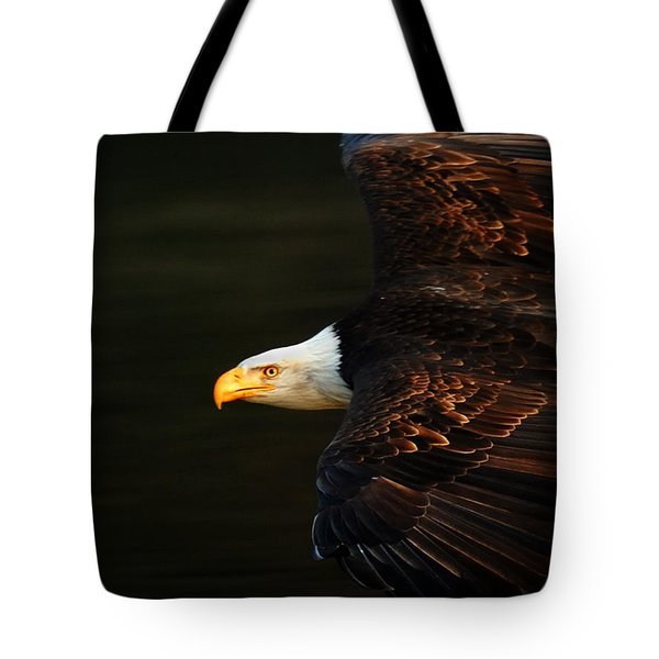 Bald Eagle In Flight Tote Bag by Bob Christopher