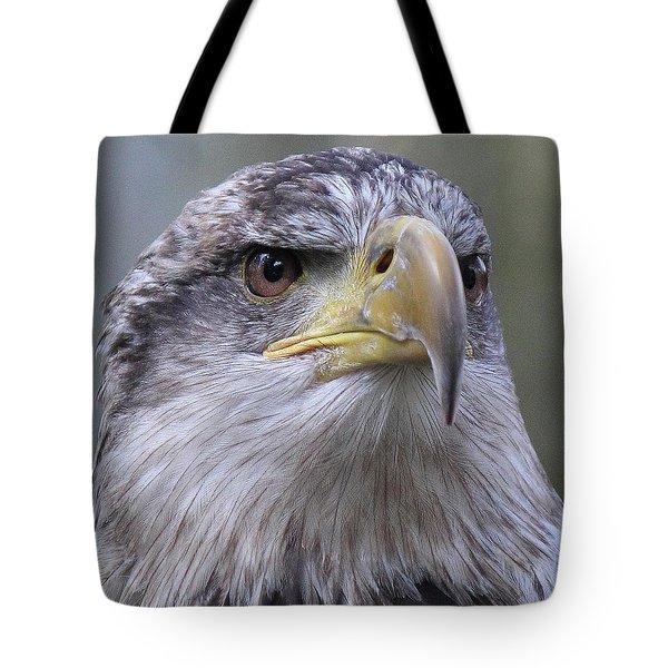 Bald Eagle - Juvenile Tote Bag