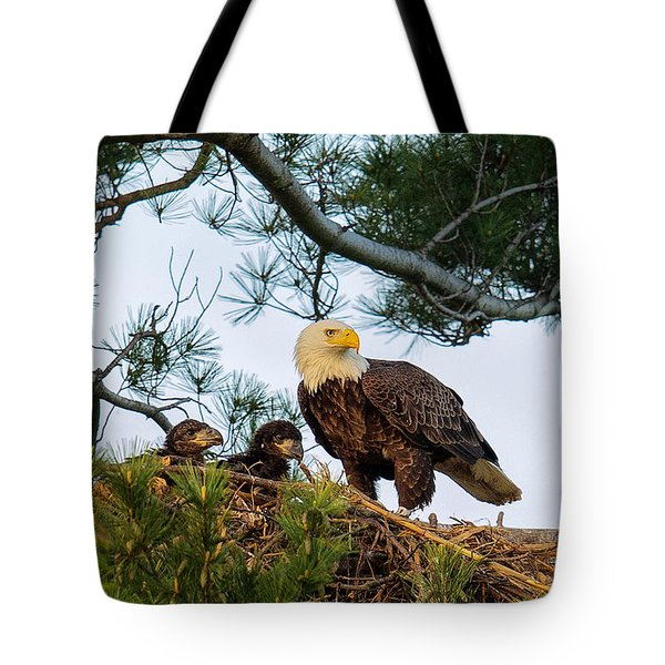 Bald Eagle With Eaglets  Tote Bag by Everet Regal