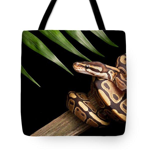 Ball Python Python Regius On Branch Tote Bag by David Kenny