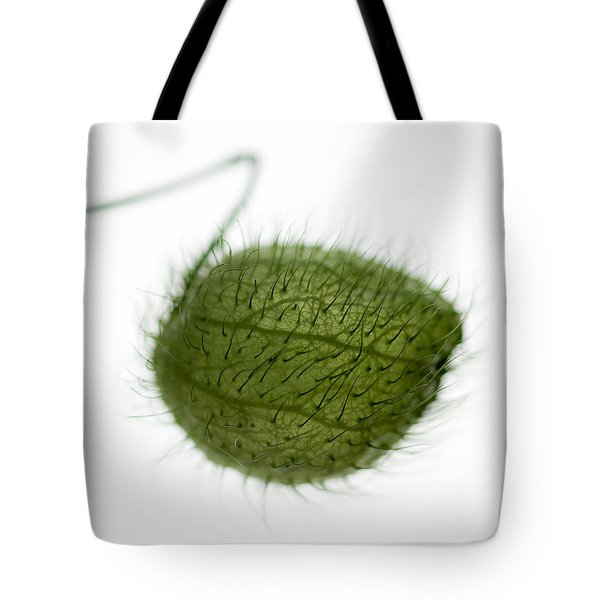 Balloon Plant Tote Bag by Dave Bowman