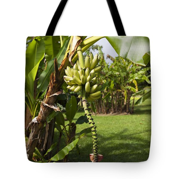 Banana Tree Tote Bag by Jenna Szerlag