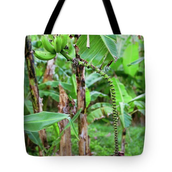 Bananas Hanging On Tree, Spring Tote Bag