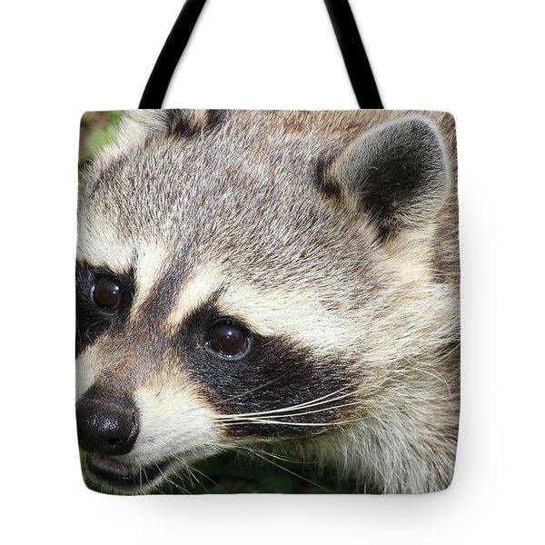 Bandit Tote Bag by Tiffany Erdman